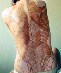 b6006b5a90590ca0db836540cb3e1bd9--human-anatomy-greys-anatomy