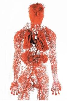 d65ed02b70981cc091c8869380b9d84b-medical-field-blood-vessels1.jpg