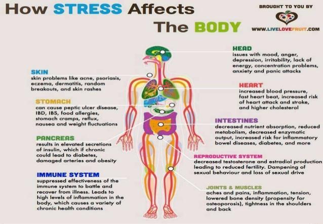 stress-and-adaptatiton-13-638